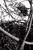 Kromofonica nido tondino 2