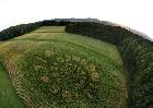 Saltimbanco crop circle