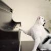 altair Il mio tocco felino